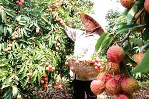Nông sản Việt và bài toán hội nhập