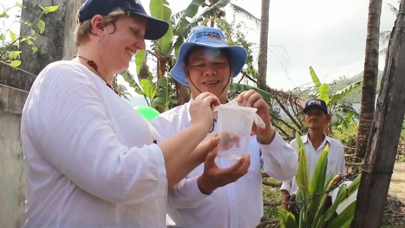 [Video] Nha Trang: Thả hơn 30.000 con muỗi ra đất liền để diệt sốt xuất huyết
