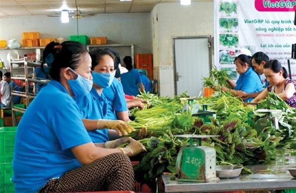 Sửa chính sách thuế, thúc đẩy phát triển kinh tế hợp tác xã