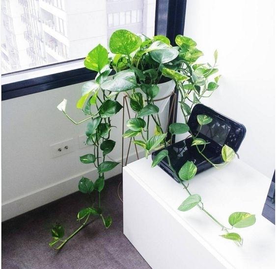 Những cây cảnh 'nhỏ nhưng có võ' hút sạch chất độc hại trong nhà - Ảnh 1