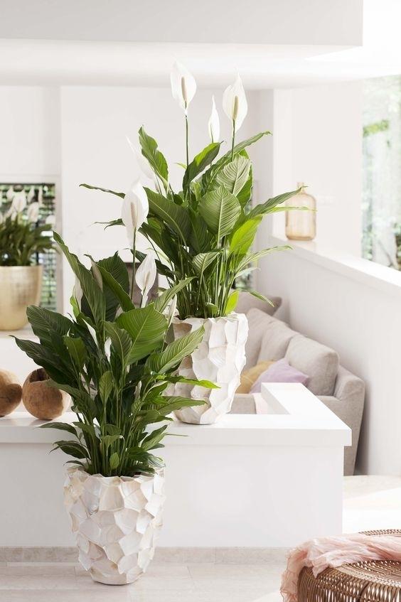 Những cây cảnh 'nhỏ nhưng có võ' hút sạch chất độc hại trong nhà - Ảnh 6