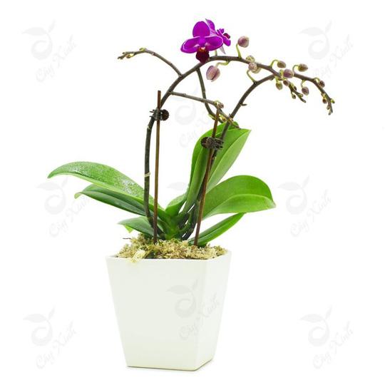Cây trồng trong nhà mang lại tài lộc và sức khỏe năm mới - Ảnh 3.