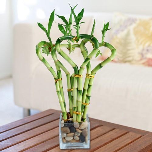 Những loại cây trồng trong nhà tốt cho sức khỏe - Ảnh 4