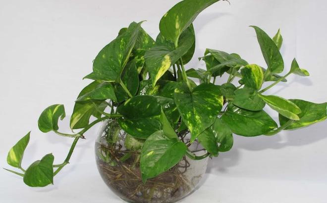 Những loại cây trồng trong nhà tốt cho sức khỏe - Ảnh 5