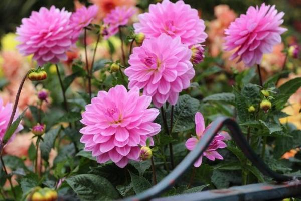 Những loại hoa nên trồng giúp không gian nhà bạn rực rỡ - Ảnh 1