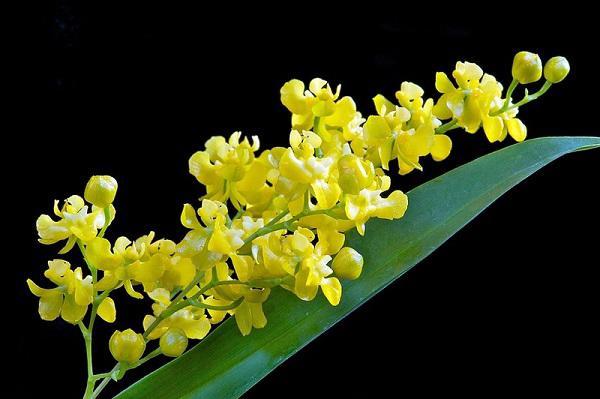 Những loại hoa nên trồng giúp không gian nhà bạn rực rỡ - Ảnh 3