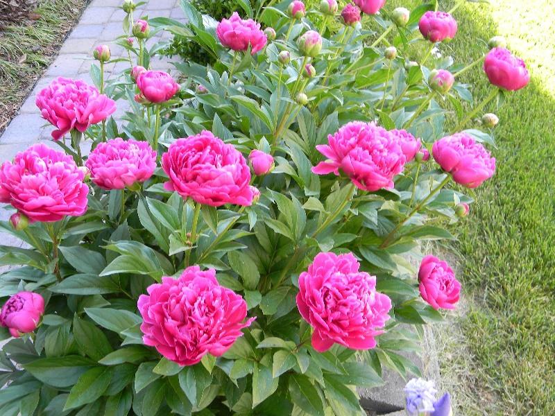 Những loại hoa nên trồng giúp không gian nhà bạn rực rỡ - Ảnh 4