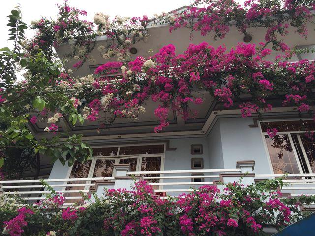 Những loại hoa nên trồng giúp không gian nhà bạn rực rỡ - Ảnh 5