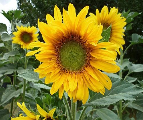 Những loại hoa nên trồng giúp không gian nhà bạn rực rỡ - Ảnh 6