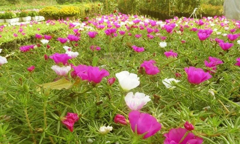 Những loại hoa nên trồng giúp không gian nhà bạn rực rỡ - Ảnh 7