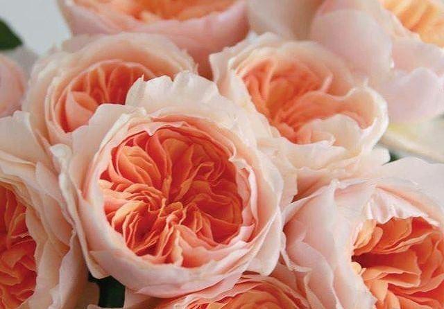 Top 5 loài hoa đắt đỏ nhất hành tinh - Ảnh 4