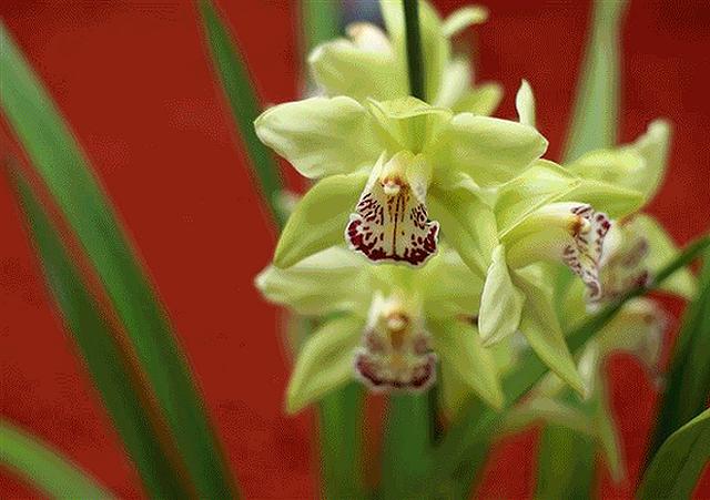 Top 5 loài hoa đắt đỏ nhất hành tinh - Ảnh 3