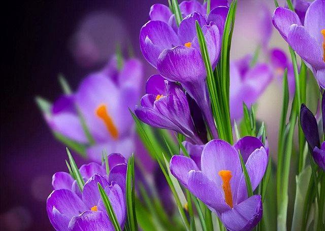 Top 5 loài hoa đắt đỏ nhất hành tinh - Ảnh 1