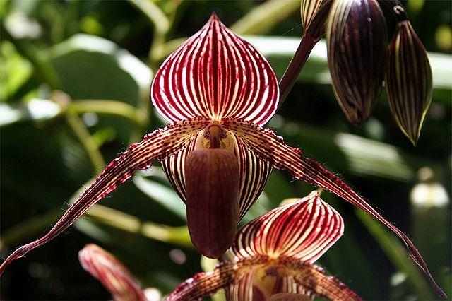Top 5 loài hoa đắt đỏ nhất hành tinh - Ảnh 2