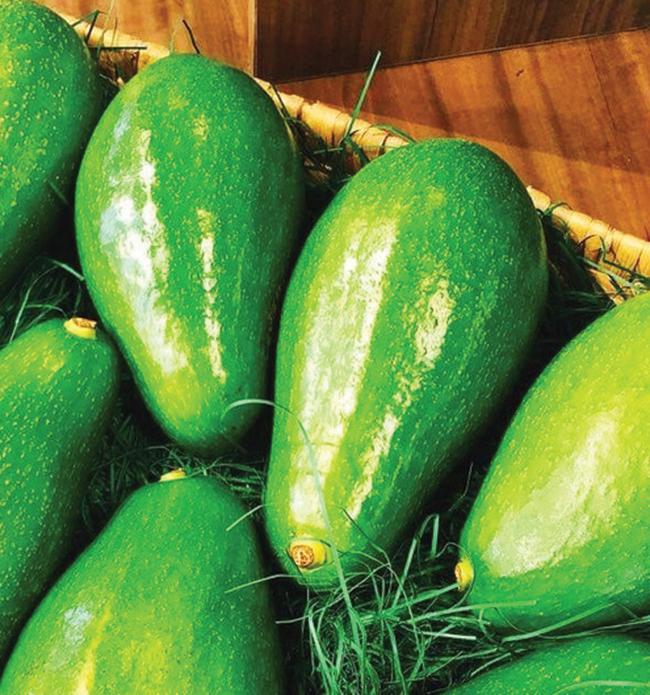 Bơ Đài Loan có giá 400.000 đồng/kg, mỗi trái nặng khoảng 1,5kg.