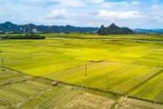 Đẩy mạnh tích tụ đất nông nghiệp ở vùng Đồng bằng Bắc bộ