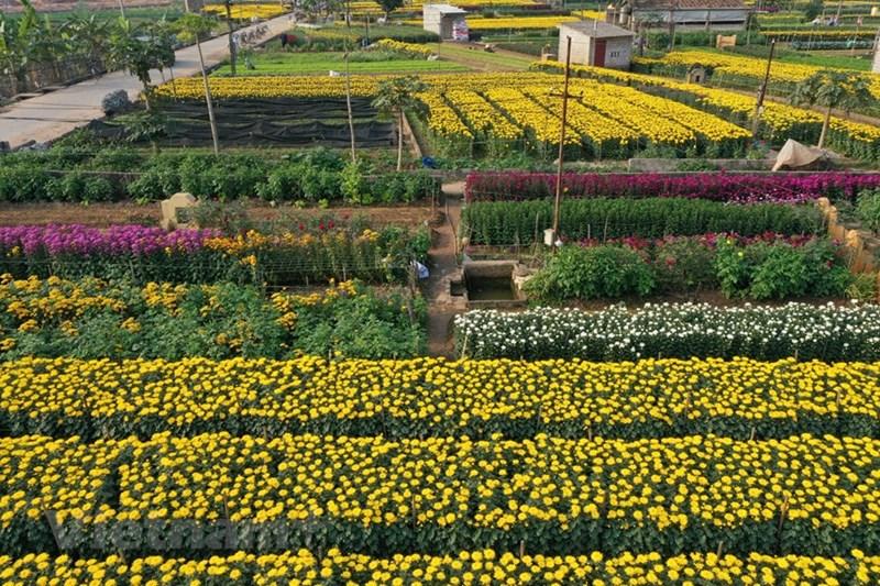 Ngắm cánh đồng hoa Viên Sơn.