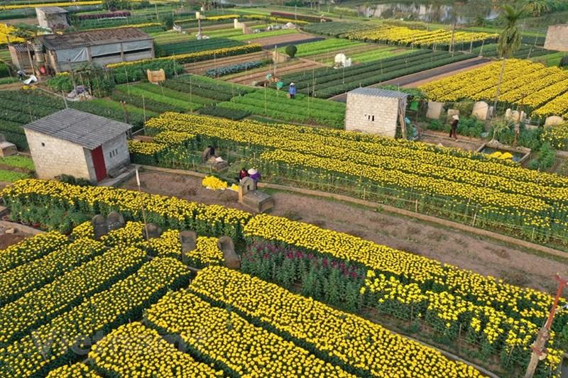 Ngoài những loại hoa thông thường, người dân cũng đã năng động hơn trong việc lựa chọn các loại hoa có giá trị kinh tế cao như: tuylip, hoa ly, loa kèn… đáp ứng nhu cầu đa dạng của thị trường.
