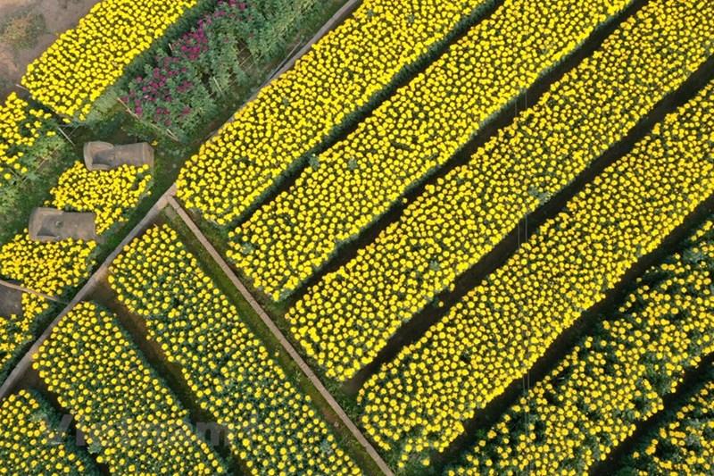 Nếu trước đây, người nông dân ở Viên Sơn trồng hoa chủ yếu phụ thuộc vào thời tiết thì nay đã biết áp dụng tiến bộ khoa học kỹ thuật vào sản xuất như thắp điện, che lưới... để hoa nở đúng thời điểm mong muốn.