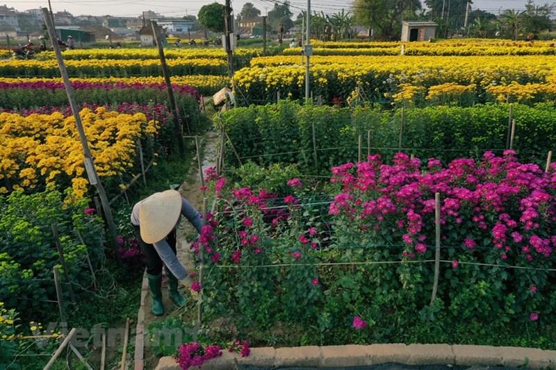 Một mùa Xuân mới đã về trên làng quê Viên Sơn. Việc chuyển đổi cơ cấu cây trồng đã mở ra hướng phát triển mới cho kinh tế, xã hội địa phương.