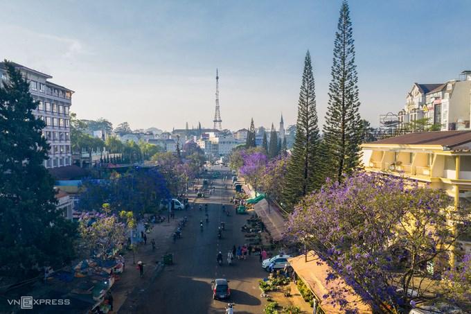 Những cây phượng tím trên đường Nguyễn Thị Minh Khai, dẫn vào trung tâm chợ Đà Lạt, cách hồ Xuân Hương 5 phút đi bộ. Phượng tím thường nở vào tháng 3, tháng 4 hàng năm, mang đến vẻ đẹp dịu dàng đặc trưng của Đà Lạt.