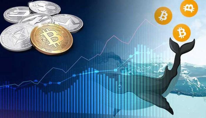 """Việc tăng, giảm giá của Bitcoin chủ yếu do sự điều tiết của thị trường, thậm chí phần lớn nằm trong tay các nhà đầu tư """"cá mập"""" và """"cá voi"""" chi phối"""