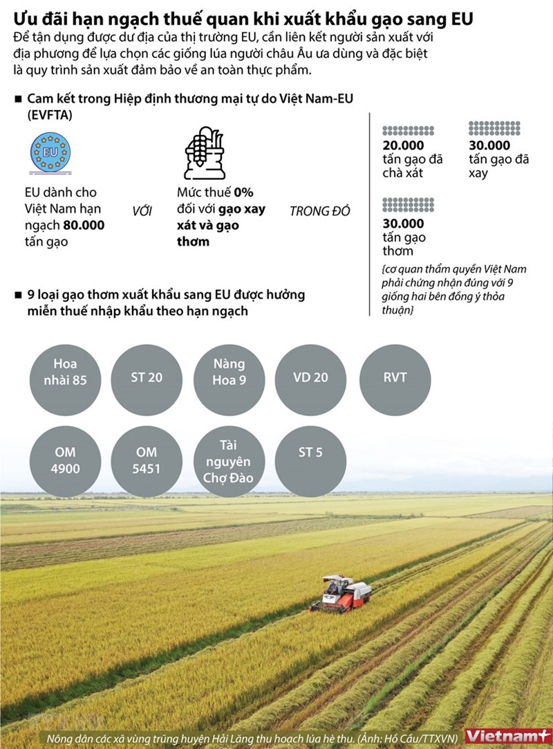 [Infographics] Ưu đãi hạn ngạch thuế quan khi xuất khẩu gạo sang EU - Ảnh 1