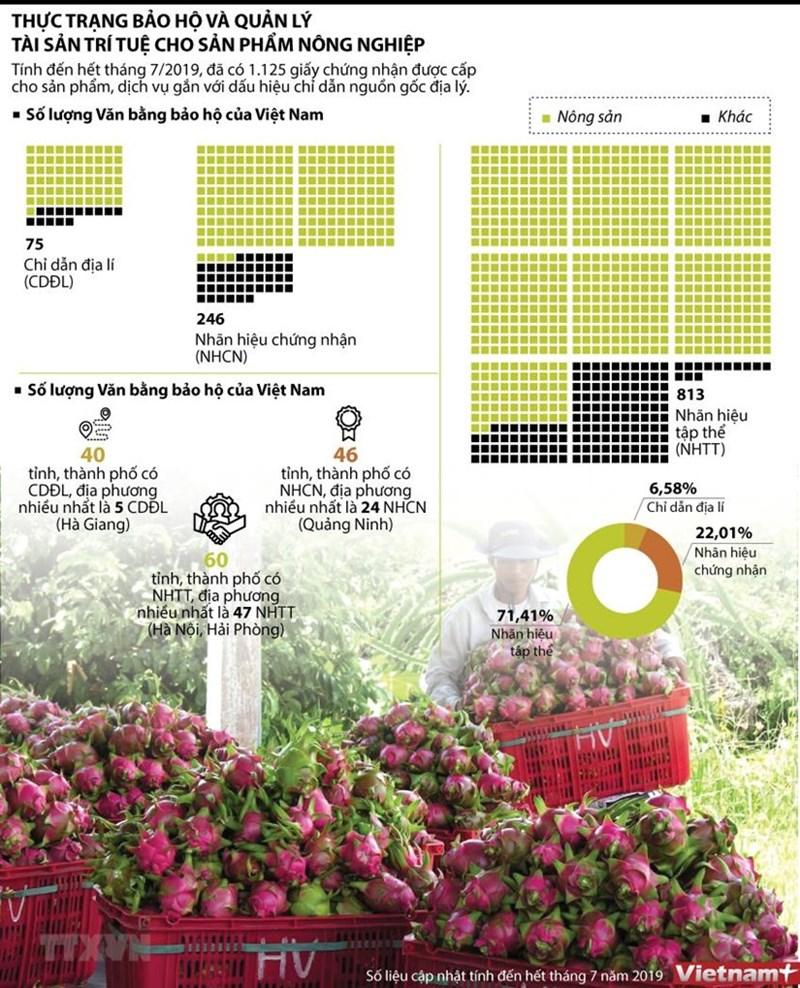 [Infographic] Thực trạng bảo hộ và quản lý tài sản trí tuệ cho sản phẩm nông nghiệp - Ảnh 1