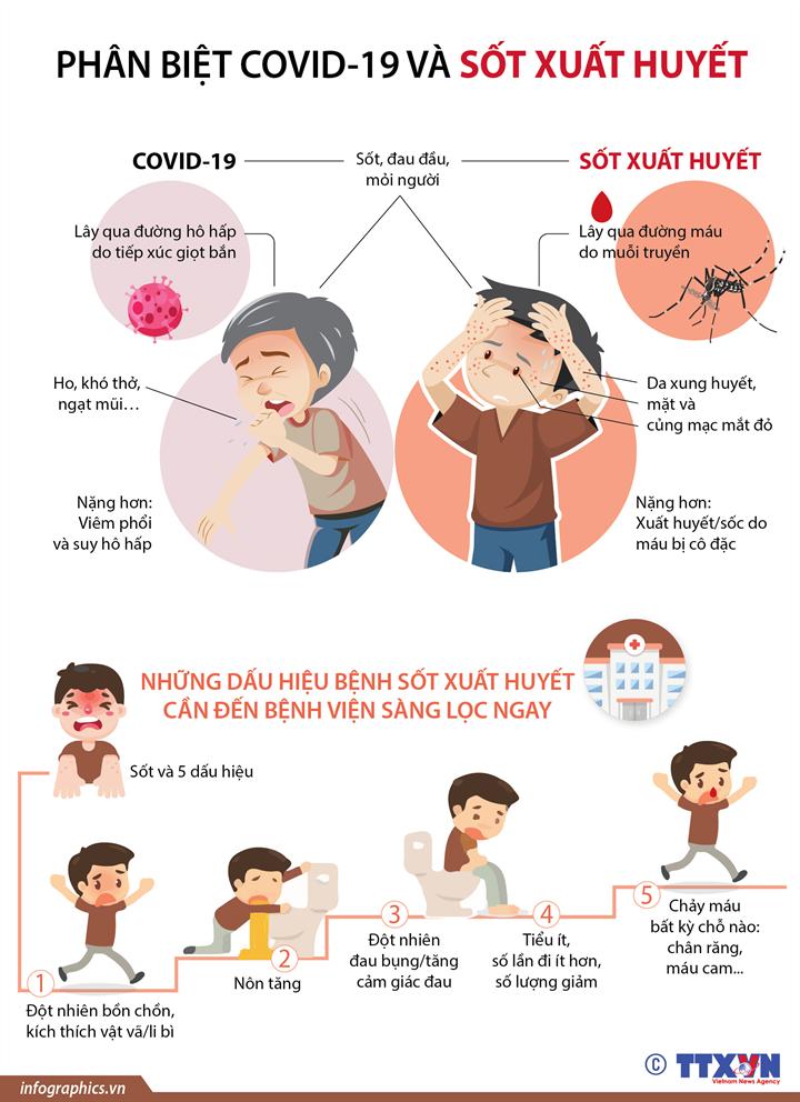 [Infographics] Phân biệt Covid-19 và sốt xuất huyết - Ảnh 1