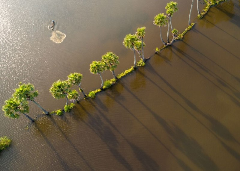 Hàng cây thốt nốt soi bóng trên màu nước phù sa Tịnh Biên, An Giang. An Giang và Đồng Tháp là những tỉnh đón nước đầu tiên, sau đó tới các vùng khác trong khu vực đồng bằng sông Cửa Long. Tùy theo năm mà lũ về sớm hay muộn. Năm nay, con nước về muộn, tận cuối tháng 8 âm lịch.