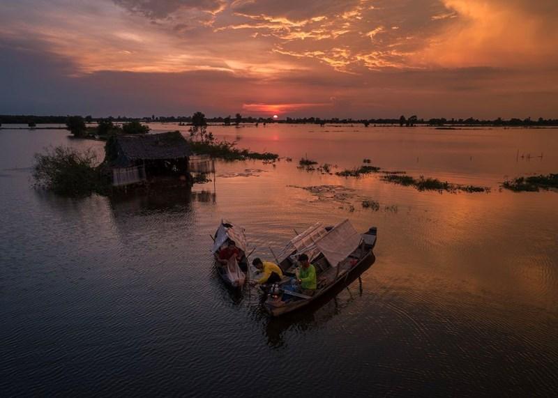 Cảnh mưu sinh trên cánh đồng ngập nước trong ánh hoàng hôn ở Mộc Hóa, Long An.