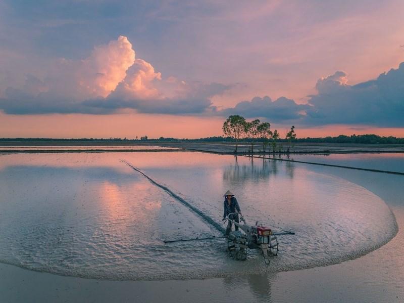 """Nông dân cày ruộng chuẩn bị cho mùa vụ mới tại Mộc Hóa. Tháng 7 nước nhảy khỏi bờ"""" là cách nói của người miền Tây về mùa nước nổi, khi dòng lũ nặng phù sa từ thượng nguồn đổ ngập ruộng đồng."""