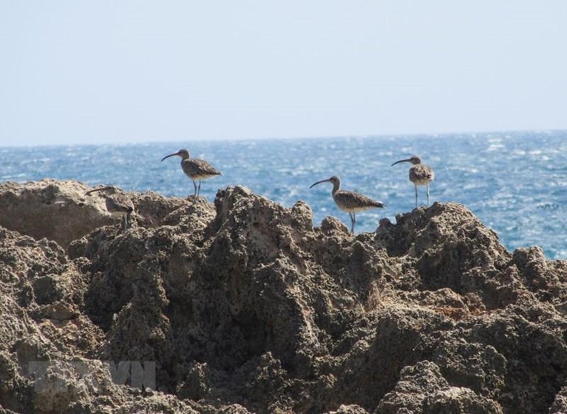 Hòn Đỏ là nơi trú ngụ của nhiều loài chim biển