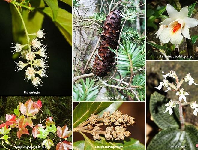 Nhiều loài cây có giá trị kinh tế cao, hoặc được sử dụng làm thuốc chữa bệnh xuất hiện tại nơi đây