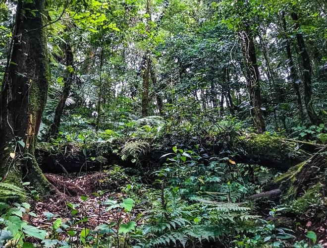 Khu bảo tồn là nơi sinh sống, phát triển của rất nhiều loài thực vật quý hiếm, cổ xưa như: Ngọc lan, họ na, họ chè, … Tiếp đó là 9 loài thực vật đặc hữu, tiêu biểu nhất là sâm Ngọc Linh