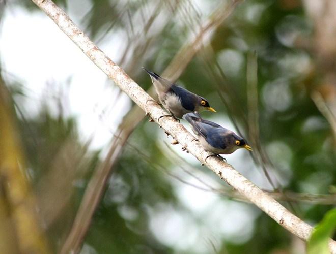 Nơi đây còn được biết đến là kho tàng đa dạng sinh học tại Việt Nam, khi có tới 874 loài thực vật bậc cao, 309 loài động vật hoang dã