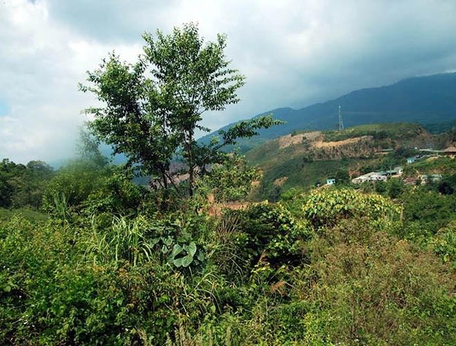 Khu bảo tồn thiên nhiên Ngọc Linh nằm trên địa bàn tỉnh Kon Tum có diện tích 41.420 ha, là 1 trong 4 địa điểm được công nhận Vườn Di sản ASEAN mới