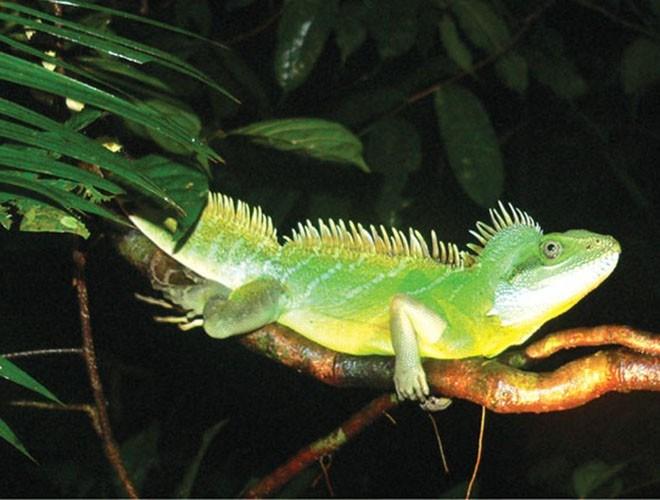 Hệ động thực vật tại đây đa dạng, phong phú. Các cánh rừng rụng lá, rừng bán rụng lá và rừng tràm nối tiếp nhau. Điểm nổi bật ở không gian của Lò Gò Xa Mát còn ở hệ chim lớn, lên đến 203 loài, đóng vai trò quan trọng trong việc bảo tồn hệ chim ở Việt Nam
