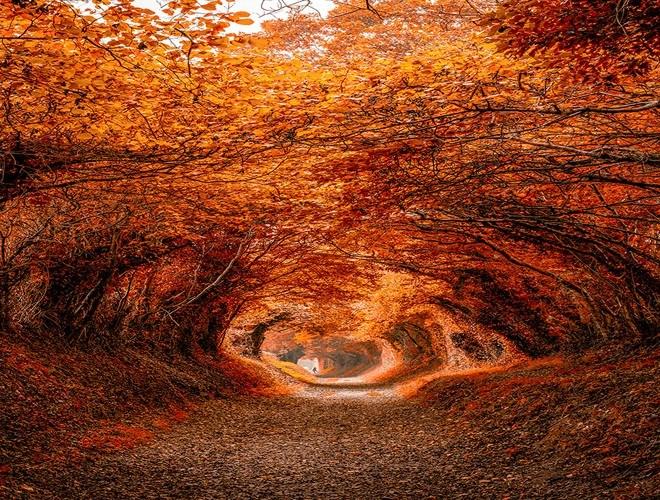 [Ảnh] Những điểm đến đẹp như cổ tích khi mùa thu tới - Ảnh 1