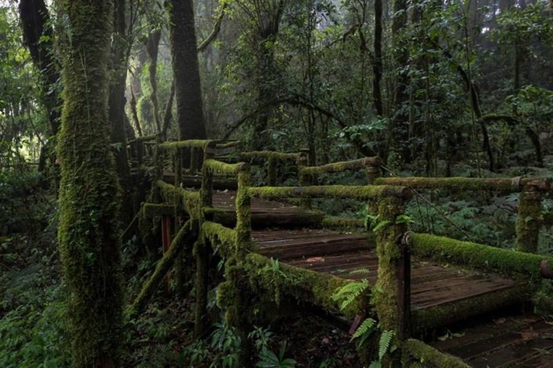 Những con đường chạy xuyên qua khu rừng nhiệt đới. (Ảnh: Alamy)