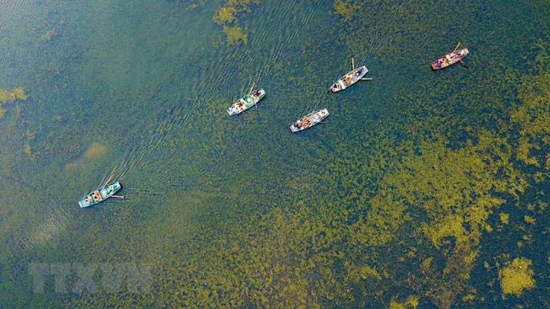 Mùa Thu tham quan Tam Cốc du khách có thể quan sát những loại thủy sinh phong phú xao động dưới làn nước hay cỏ lác mọc trên đầm, tất cả đều tạo nên một vẻ đẹp ấn tượng của tự nhiên. (Ảnh: Minh Đức/TTXVN)