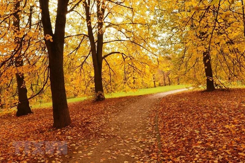 Con đường mùa thu rợp lá vàng ở công viên Kolomensk. (Ảnh: Trần Hiếu/TTXVN)