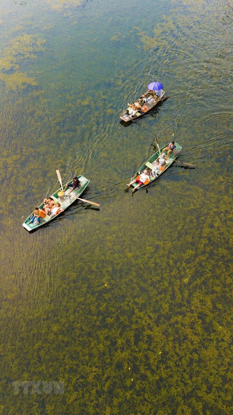 Mùa Thu tham quan Tam Cốc du khách có thể quan sát những loại thủy sinh phong phú xao động dưới làn nước hay cỏ lác mọc trên đầm, tạo nên một vẻ đẹp ấn tượng của tự nhiên. (Ảnh: Minh Đức/TTXVN)