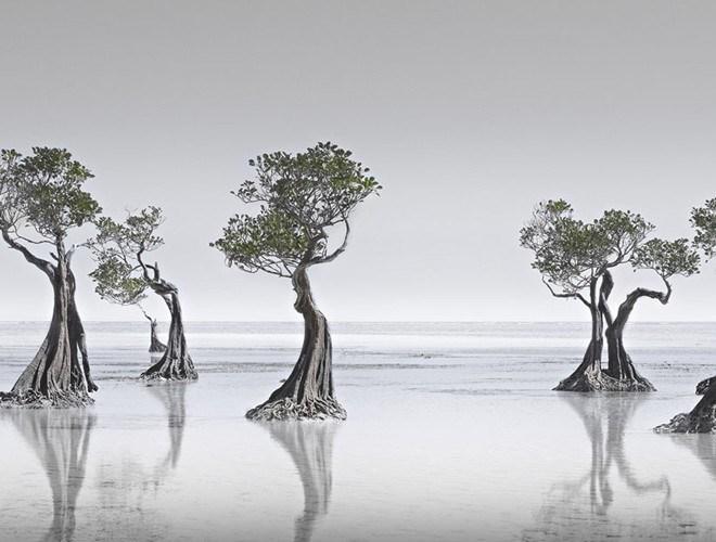 """""""Dancing Mangroves"""" (Vũ điệu rừng ngập mặn) của tác giả Wong Choon Keat vào top 5 ảnh đẹp thể loại Thiên nhiên và Phong cảnh"""