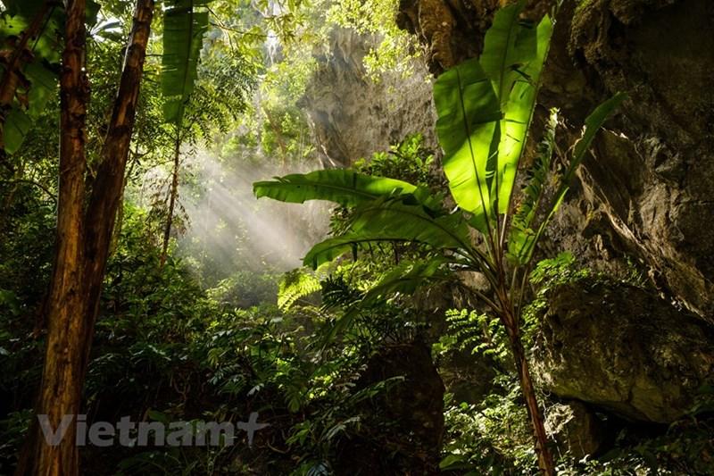 Rừng nhiệt đới trong hang Sơn Đoòng. (Nguồn: Oxalis Adventures/Ryandeboodt)