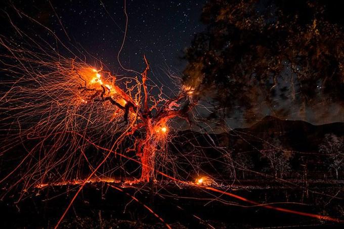 Bức ảnh phơi sáng dài cho thấy đường đi của tàn tro bắn ra từ một thân cây đang bị thiêu rụi trong vụ cháy rừng lịch sử ở California vào tháng 10. Hiệu ứng hình ảnh biến khung cảnh hủy diệt thành một tác phẩm nghệ thuật mang vẻ đẹp trừu tượng. Ảnh: Philip Pacheco/AFP/Getty.