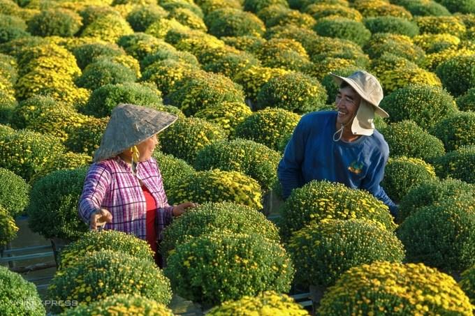 """Tác phẩm """"Nụ cười được mùa hoa Tết"""" ở Sa Đéc, Đồng Tháp. Gần một tháng trước Tết Nguyên đán cũng là lúc nông dân nhộn nhịp chăm sóc vụ hoa, gồm cúc mâm xôi, phục vụ thị trường hoa Tết."""