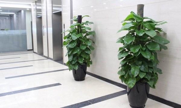 7 loại cây cảnh giúp môi trường làm việc hiệu quả hơn - Ảnh 6