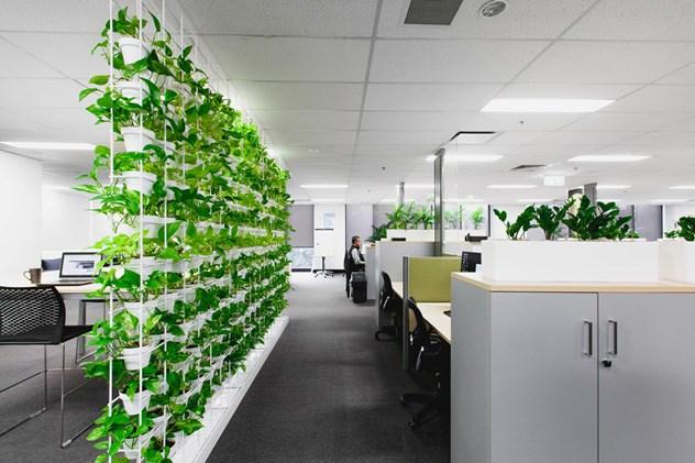 Những yếu tố cần lưu ý khi thiết kế văn phòng xanh - Ảnh 4