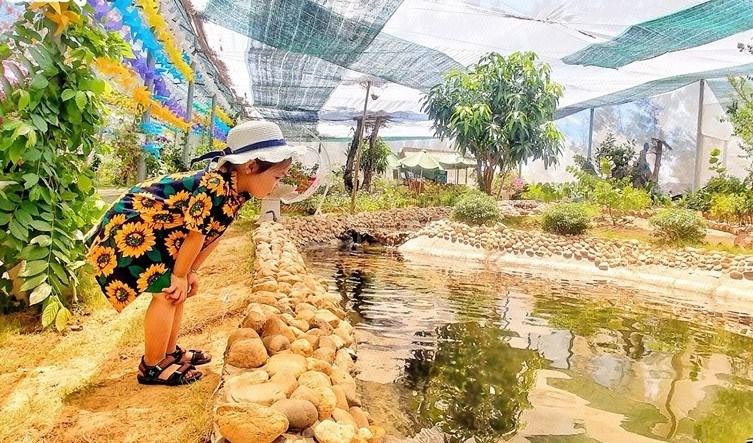"""Du khách nhí đang chăm chú quan sát một bạn cá """"trốn tìm"""" tại FLC Zoo Safari Park Quy Nhơn."""